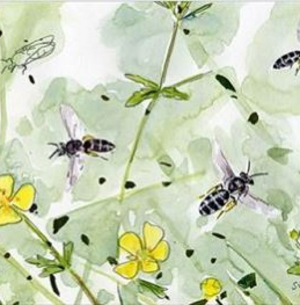 Bee Aware: Our Bees are in Trouble