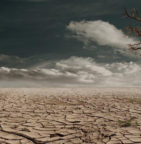 TALK: 'Our Planet' Part 2: The Surface: Soils
