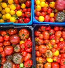 You can now support Community Agriculture in Dorset
